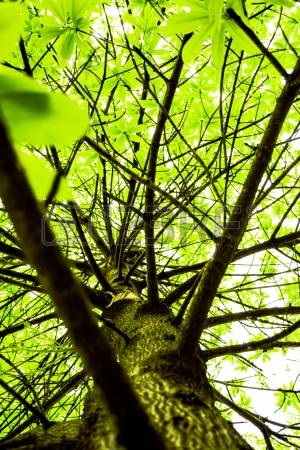 19008101-green-treetop-branch-branches-leaves.jpg